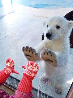 Imagen de cute, animal, and bear