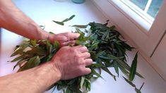 зеленый чай отзывы худеющих дцп