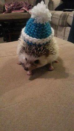 Custom Crochet Beanies for Pets : by HandmadebyJoci on Etsy
