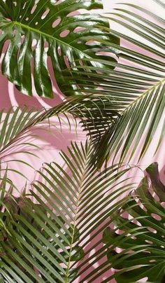 Arranged for iPhone X, Beautiful Wallpapers, Background ✾ c. - Arranged for iPhone X, Beautiful Wallpapers, Background ✾ c h x r i s s x - Leaves Wallpaper Iphone, Plant Wallpaper, Tropical Wallpaper, Wallpaper For Your Phone, Nature Wallpaper, Wallpaper Backgrounds, Iphone Wallpapers, Pinky Wallpaper, Amazing Wallpaper