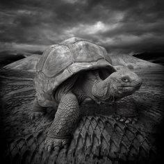 """""""Don't look at me , I'm not ready !!!!"""" by yves.lecoq on flickr.com"""