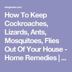 How To Keep Cockroaches, Lizards, Ants, Mosquitoes, Flies Out Of Your House - Home Remedies | Dengarden