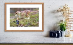 This print of Jurassic World's Owen Grady minifigure with binoculars and a Tyrannosaurus Rex in the background is perfect for a kid's room! Get yours today! Visit my full shop: JHKPhotographyStudio.etsy.com #lego #leogwallart #legoprints #dinosaurs #dinosaurwallart #dinosaurprints #jurassicworld #jurassicworldprints #jurassicworldwallart #owen #trex #tyrannosaurusrex Lego Wall Art, Kids Room Wall Art, Nursery Wall Art, Modern Art Prints, Wall Art Prints, Poster Prints, Lego Pictures, Lego Photo, Birthday Gifts For Kids