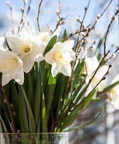 Pääsiäisruno – valitse suosikkisi ja muista läheisiäsi! - Kotiliesi.fi Easter Recipes, Plants, Plant, Planets