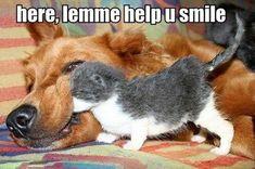 Sure helped me =)