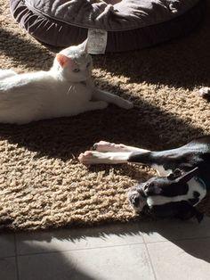 Astro and Sugar share the sun.