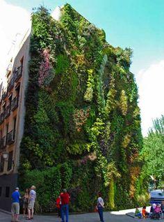 Progreencity. Recubrimientos vegetales en fachadas.