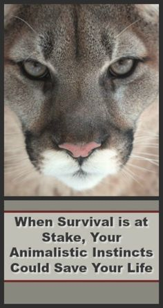 This article really gets you thinking about the prepper mindset and how you will react in a disaster. We all have innate animal behaviors at the very core. Which will you be, the predator or the prey?