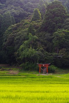 Forest of a village shrine ,Japan Japan Countryside, Countryside Landscape, Forest Landscape, Landscape Photos, Landscape Photography, Nature Photography, Japanese Landscape, Japanese Architecture, Image Japon