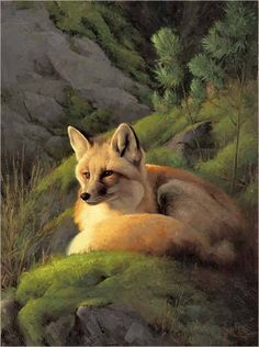 Fox...Greg Beecham. This is a beautiful picture.