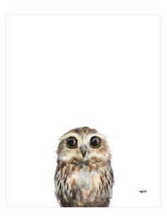 Little Owl by Amy Hamilton (Canvas) from Affordable Art: Works Under $100 on Gilt