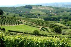 http://upload.wikimedia.org/wikipedia/commons/6/6f/Vineyards_in_Piemonte,_Italy.jpg