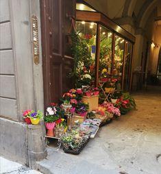Italy, Plants, Italia, Plant, Planets