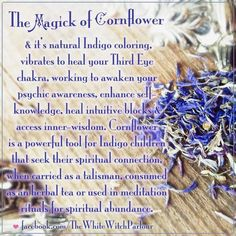 witch, herbs, apothecary, correspondance, magickal, magick, spells, meaning, cornflower, indigo, third eye, spiritual, tea, psychic, talisman, ritual, meditation, healing, vibration, book of shadows, holistic facebook.com/thewhitewitchparlour Cornflower available here: www.whitewitchpar...