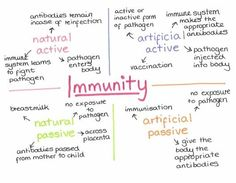 different types of acquired immunity Pathophysiology Nursing, Pharmacology Nursing, Np School, School Info, Best Nursing Schools, Nursing School Notes, Advanced Nursing, Medical Laboratory Science, Anatomy And Physiology