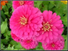 Happy..Sweet..Pink...Flowers for You