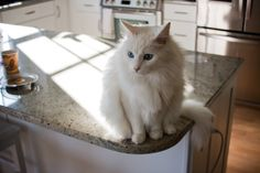 4 Methods To Keep Your Cat Off The Counter ... Cats are naturally inclined to climb and jump, and sometimes they jump on the countertops. Given that this is the place where we often prepare food and eat meals, it's not only inconvenient, it's unsanitary. Keep reading to learn some of the methods you can use to keep your cat off of the counter. ... #petcaretips #pets #animals ... PetsLady.com