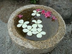 Anderson Japanese Gardens - lovely floating dogwood and rhododendron blossoms