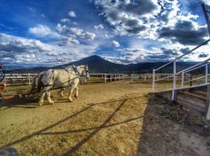 Head out to @snowmountainranch this #summer for #hayrides #trailrides and #horsebackriding! #playwinterpark #winterparklife #horse #horseriding #coloradolive