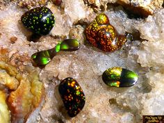 This 5 piece group of smaller sized free form cut Fire Agate cabochons has a total carat weight of carats, with all displaying nice full coverage fire. Green And Gold, Red Green, Group Of Five, Agate Jewelry, Agate Gemstone, Low Lights, Cool Lighting, Rocks And Minerals, Deer