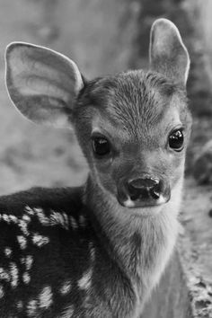 cute animals, adorable deer, animal pictures and it Bambi Cute Creatures, Beautiful Creatures, Animals Beautiful, Beautiful Eyes, Beautiful Pictures, Pretty Animals, Colorful Animals, Woodland Creatures, Pretty Eyes