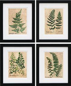 framed fern prints   Pressed Fern Prints   Prints and Graphics   Shaker Workshops