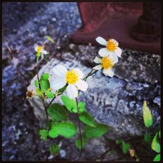 It amazes me to see a flower work its way through the concrete and steel. It gives me hope.