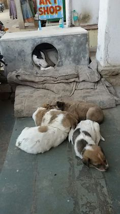 Mummy and puppies...