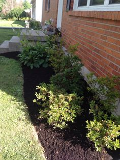 Groupings: Azaleas and hostas, front to back