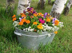 Pretty Bucket o flowers!