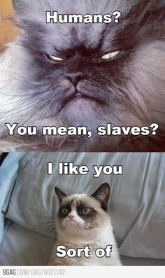 Grumpy cat has a friend!! Sort of...