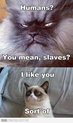 Grumpy cat has a friend!! Sort of...