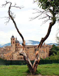 URBINO (Marche) - by Guido Tosatto Monument Valley, Mansions, Landscape, House Styles, Travel, Sweetie Belle, Italia, Walking, Viajes