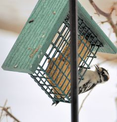 We like feeding the birds in winter, but don't like paying a fortune for seed and suet. Here's an easy and inexpensive recipe for homemade suet that the birds seem to love. Using this, we see quite...