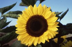Sunflowers is my favourites :-)