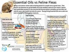 Young Living Essential Oils: Cat Feline Fleas Collar Pet Shampoo | Projects to Try | Pinterest ...