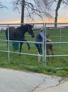 Zenyatta Delivers a Candy Ride Filly. Showing baby how to dance!