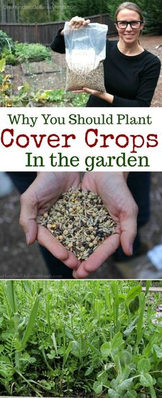 Cover Crops, Gardening 101, The Best Cover Crops, Cover Crops for Vegetable Gardens, Gardening Basics, Fall Gardening Tips