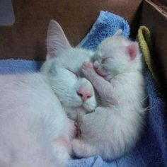 kitten with his mom. So cute!