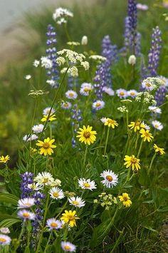 Fields of Flowers! Meadow Flowers, Wild Flowers, Beautiful Flowers, Field Of Flowers, Forest Flowers, Purple Flowers, Meadow Garden, Garden In The Woods, All Nature