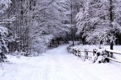 Get your joints in the best possible condition to enjoy festive walks this winter…