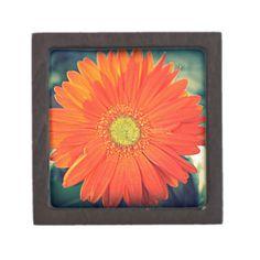 Orange Gerbera Premium Gift Box