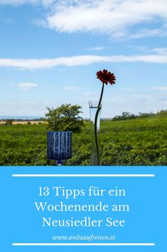 Wind Turbine, Restaurants, Travel, Vineyard Vines, Slovenia, Time Travel, Alps, Travel Advice, Viajes