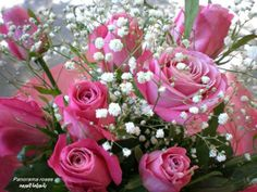 Pink roses and white flowers