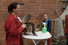 20 november Being a steward. November, Cats, November Born, Gatos, Cat, Kitty, Kitty Cats