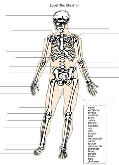 FREE Human Anatomy Printables | Science Resources for ...