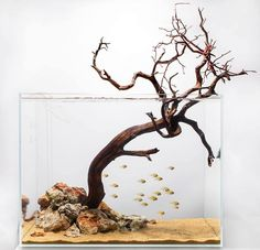 .Extending the design of your aquarium and sometimes keeping it simple can be just as eye-catching as a lush landscape. There is Zen beauty to this aquascape that doesn't detract from the fish.