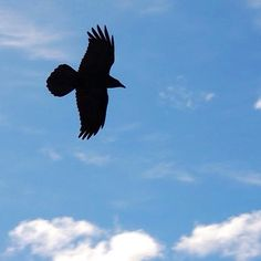 Free as a bird #travel #flying #bird #cali #california #bluesky #blueskies #yosemite #silhouette #freedom #nature