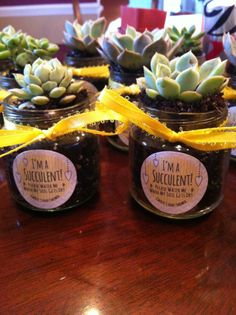 Succulent baby shower favors one of our customers made using empty baby food jars. so creative! Baby Shower Food For Girl, Baby Shower Sweets, Baby Shower Winter, Boho Baby Shower, Baby Shower Signs, Baby Shower Cupcakes, Baby Shower Favors, Baby Food Jar Crafts, Baby Food Jars