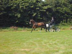 Silady (Lorton x Jilady v. Goudsmid) tijdens het losrijden op de Dag van het Gelders Paard in Hengelo Gld., waar zij in de M-rubriek eerste werden.